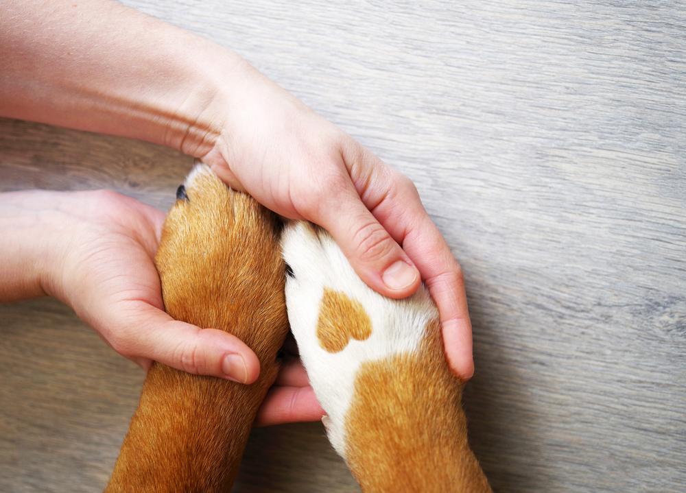 Une bonne assurance pour animaux