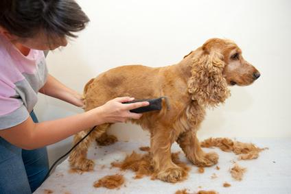 Comment choisir une tondeuse pour chien ?
