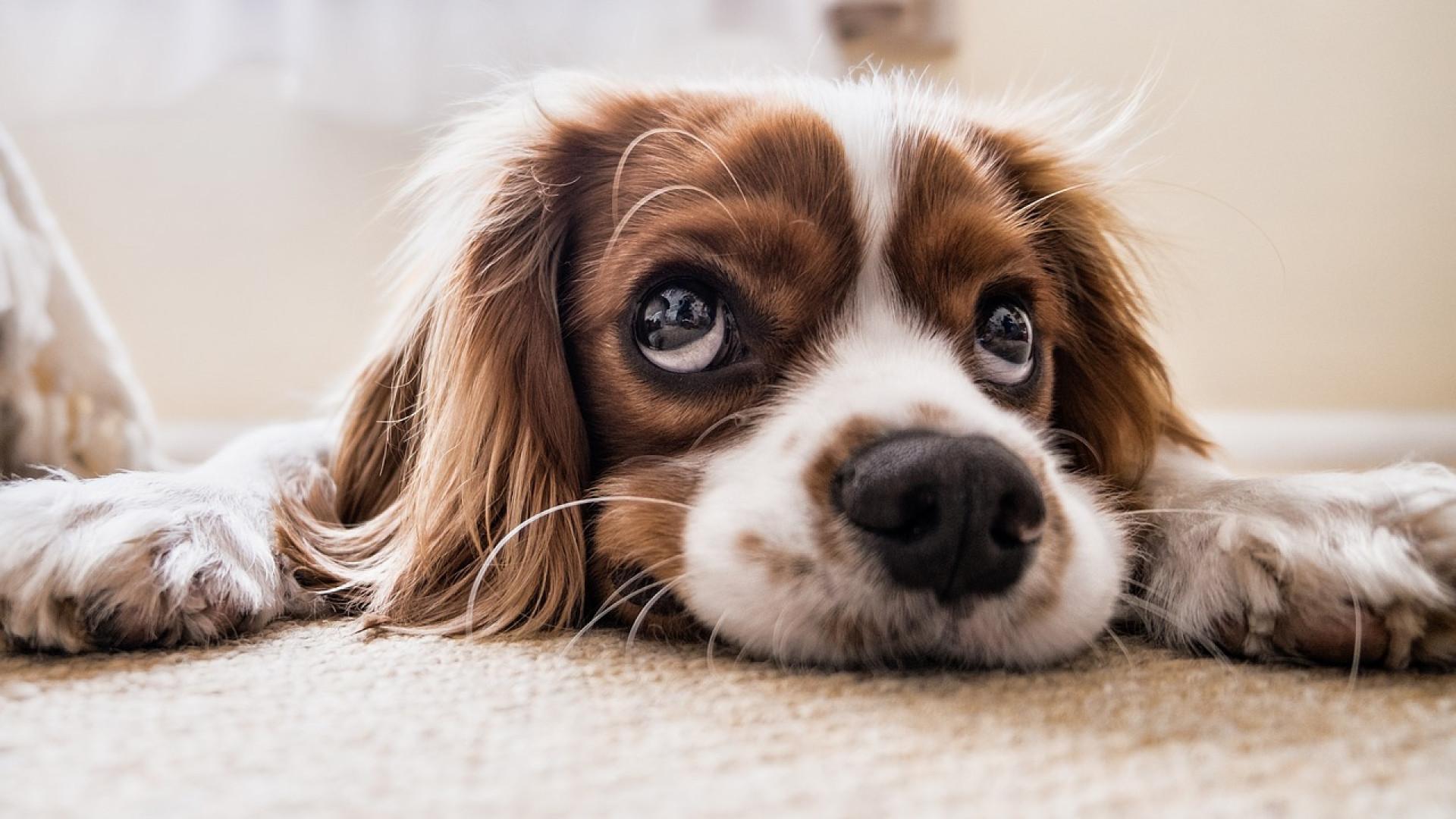 3 conseils pour améliorer durablement la qualité de vie de votre chien