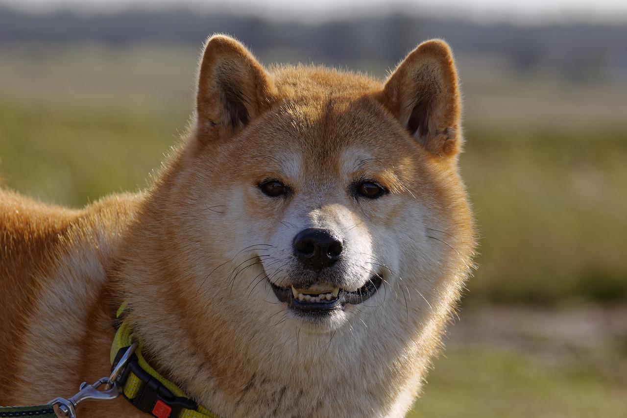Collier anti fugue pour votre chien : guide d'achat, conseil