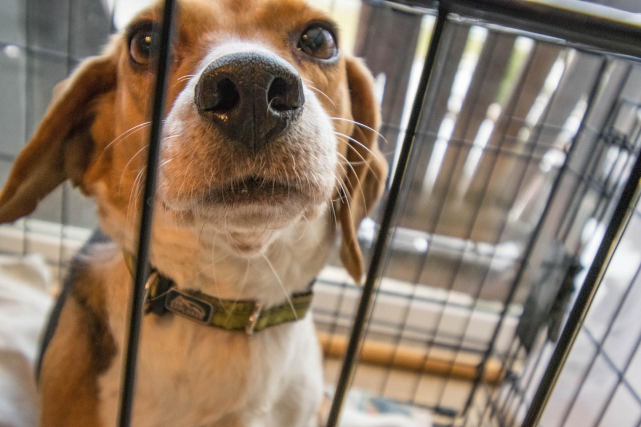 La cage d'intérieur pour chien : ce qu'il faut savoir