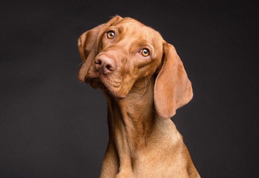 Quels objets technologiques pour chiens de chasse ?